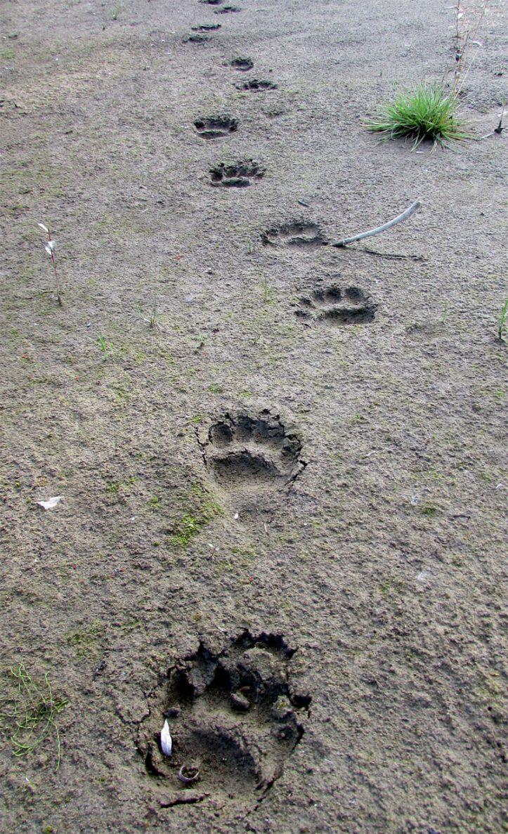 Bärenspur-web
