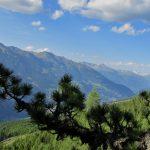 Zirbe und Berge