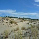 Spurenlesen im Sand